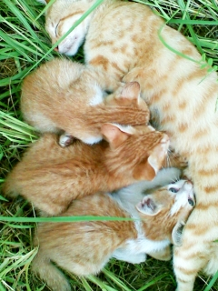 3kitties-with-mom-cats-3893875-1152-864.jpg