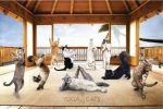 yoga cats 2
