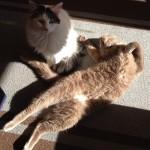 yoga cats 22