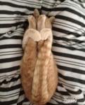 yoga cats 3