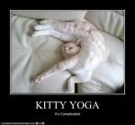 yoga cats 34