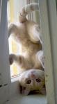 yoga cats 36