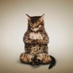 yoga cats 8