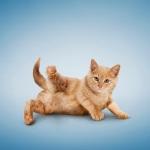 yogacats5