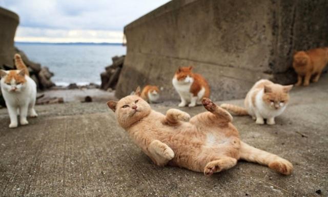 gatos-G.jpg